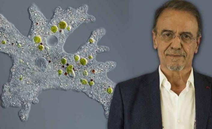 'Mutasyon Salgının Bitişi İçin Beklenen Başlangıç Olabilir'