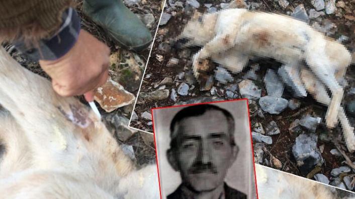 Günde 5 Ekmek Yediği için Köpeğini Öldürdü!