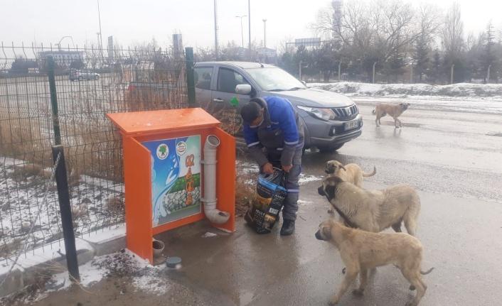 Mamak Yoğun Kar Yağışında Can Dostlarımızı Yalnız Bırakmadı