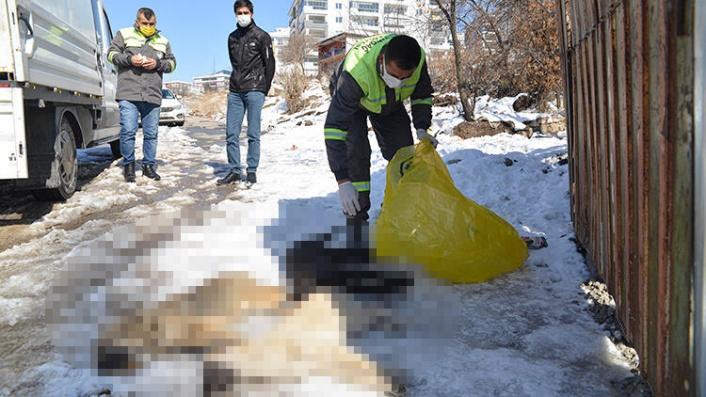 Ankara'da 3 Yavru Köpek Ölü Bulundu! Donarak Öldüler İddiası!