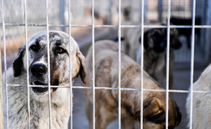 Büyükşehir'den Sokak Hayvanları için İlçe Belediyeleri ve Gönüllülerle İşbirliği