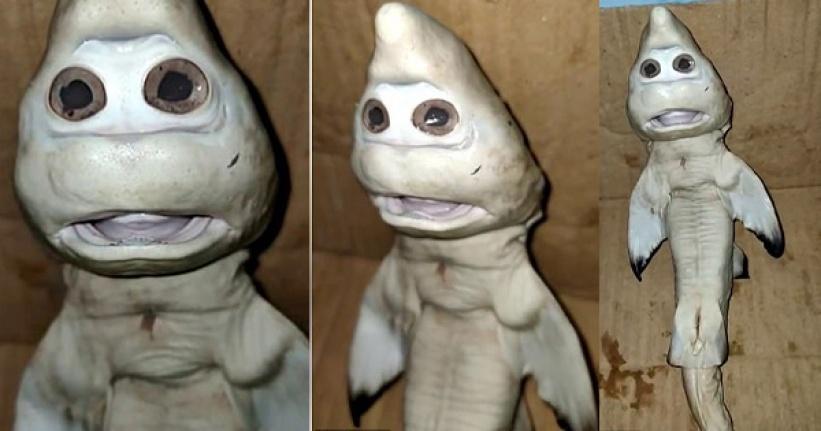 Görenleri Şaşkına Çevirdi: İnsan Yüzlü Köpek Balığı