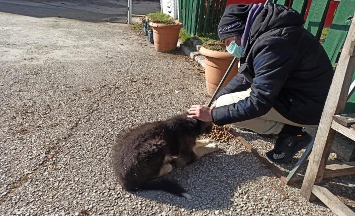 BTP Ankara Gençlik Kolları Sokak Hayvanlarını Besledi
