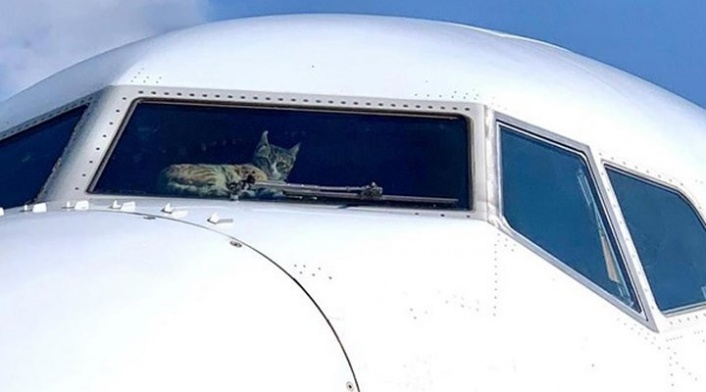 Uçakta Kokpite Sızan Kedi Mürettebata Saldırdı!