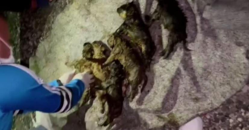 Ankara'da 6 Yavru Köpek Foseptik Çukuruna Atıldı!