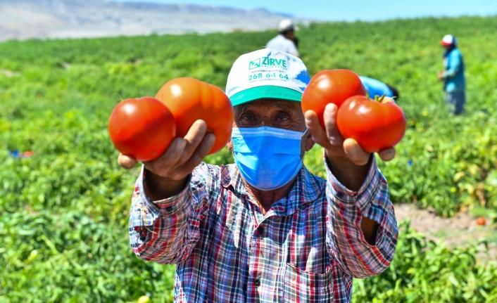 Ankara'da Çiftçiye Sebze Fidesi Desteği