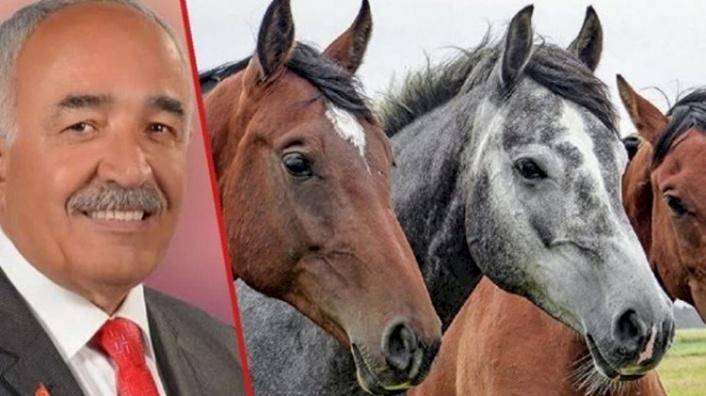 Kayıp Atlara Ne Oldu? İstifa Eden Başkan Açıkladı!