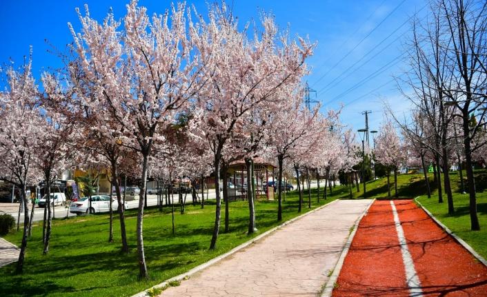 Mamak Belediyesi Baharı Getirdi!