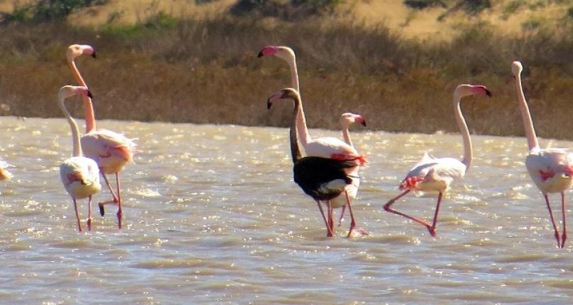 Ankara'da Flamingo Katliamı: Bunu Yapan İnsan Olamaz!
