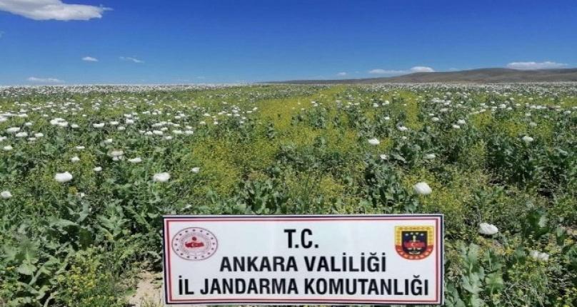 Ankara'da İzinsiz Ekilen 218 Bin Kök Haşhaş Bitkisi İmha Edildi