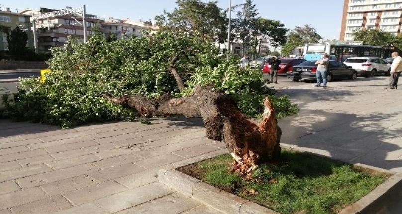Ankara'da Rüzgarda Devrilen Ağaç İki Aracın Üzerine Yıkıldı