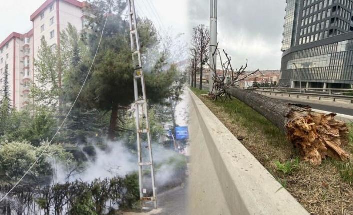 Ankara'da Şiddetli Rüzgar Ağaçları Devirdi!