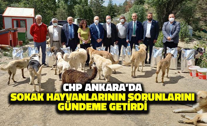 CHP Ankara'da Sokak Hayvanlarının Sorunlarını Gündeme Getirdi