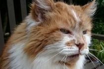 Dünyanın En Yaşlı Kedisi 31 Yaşında Yaşamını Yitirdi