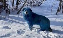Terk Edilmiş Fabrikanın Yakınındaki 'Mavi Köpekler' Olay Yarattı