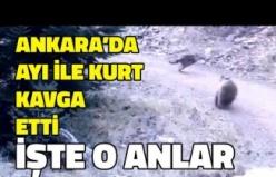 Ankara'da Ayı ile Kurt Birbirine Girdi: İşte Nefes Kesen O Kavga!