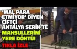Antalya Serik'te Bir Çiftçi Satamadığı Mahsullerini Yere Döktü: 'Mal Para Yapmıyor!