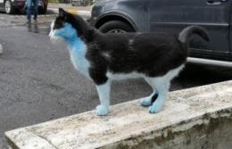 Görüntüler Şaşırttı: Mavi Kediler!