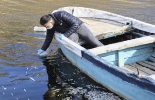 Ankara'da Barajdaki Balık Ölümleri Araştırılıyor