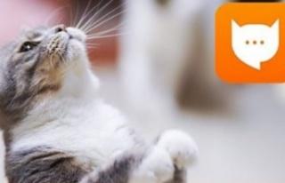 Kedilerin Miyavlamalarını Tercüme Eden Uygulama...