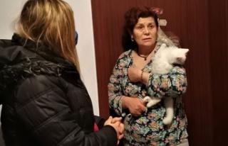 Ankara'da Van Kedisi Baskını: 8 Van Kedisine...