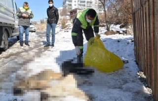 Ankara'da 3 Yavru Köpek Ölü Bulundu! Donarak...
