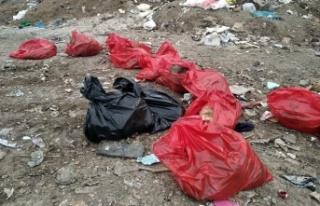 Ankara Barosundan Köpek Ölümleriyle İlgili Suç...