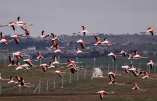 Ankara'da Flamingolar Nefes Kesti
