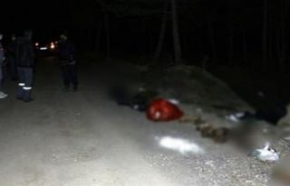 Ankara'da Damar Yolu Açılmış 30 Köpek Ölü...