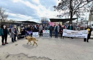 Ankaralı Hayvanseverler Can Dostları için Bir Araya...