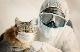 Sahibinden Koronavirüs Bulaşan Kedi Öldü