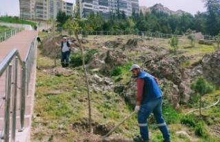 Ağaçlandırma Seferberliğinde Vatandaş ve Belediye...