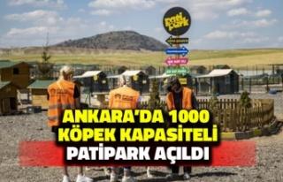 Ankara'da 1000 Köpek Kapasiteli Patipark Açıldı