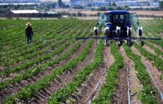 Ankara'da 8 Milyon Sebze Fidesi Çiftçiyle Buluşuyor