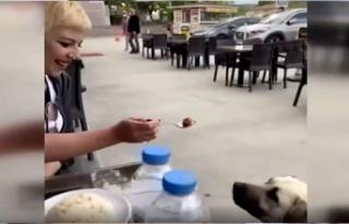 Ankara'da Bir Kadının Lokantada Yaptığı...