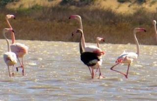 Ankara'da Flamingo Katliamı: Bunu Yapan İnsan...