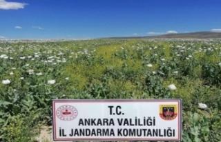 Ankara'da İzinsiz Ekilen 218 Bin Kök Haşhaş...