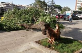 Ankara'da Rüzgarda Devrilen Ağaç İki Aracın...