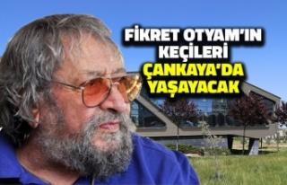 Fikret Otyam'ın Keçileri Çankaya'da Yaşayacak