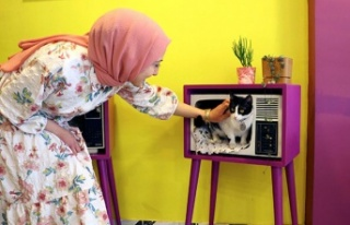 Ankara'nın İlk Kedi Kafesi Kapılarını Açtı