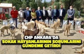 CHP Ankara'da Sokak Hayvanlarının Sorunlarını...