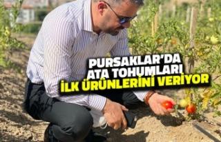 Pursaklar'da Ata Tohumları İlk Ürünlerini...
