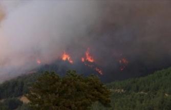 Adana'da Orman Yangını: Çevre Evler Boşaltılıyor!