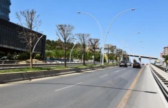 Ankara'da Ağaçların Kurumasıyla ilgili Açıklama: Sebebi Beton!