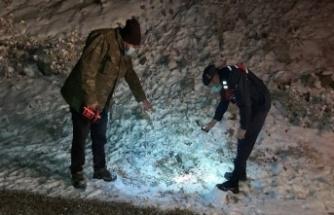 Ankara'da Kurtlar 10 Koyunu Telef Etti