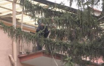 Ankaralı Vatandaş, Fırtınada Devrilmesin Diye Ağacı Balkonuna Bağladı