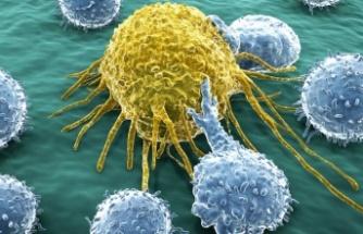 Kanser Hücreleri Kış Uykusuna Yatarak Kemoterapiden Korunuyor!
