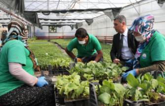 Gölbaşı Belediyesi, Yerli Tohum Geleneğini Yeniden Canlandırıyor