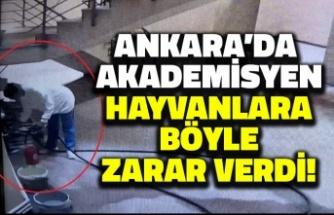 Ankara'da Akademisyen Köpeklere Böyle Zarar Verdi!