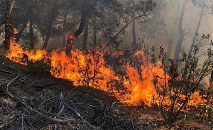 İki Günde Çıkan Altı Orman Yangınının Nedeni Belli Oldu